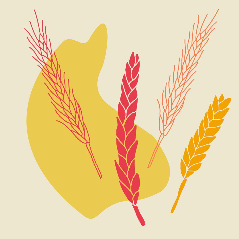 création charte graphique - écologie agriculture responsable