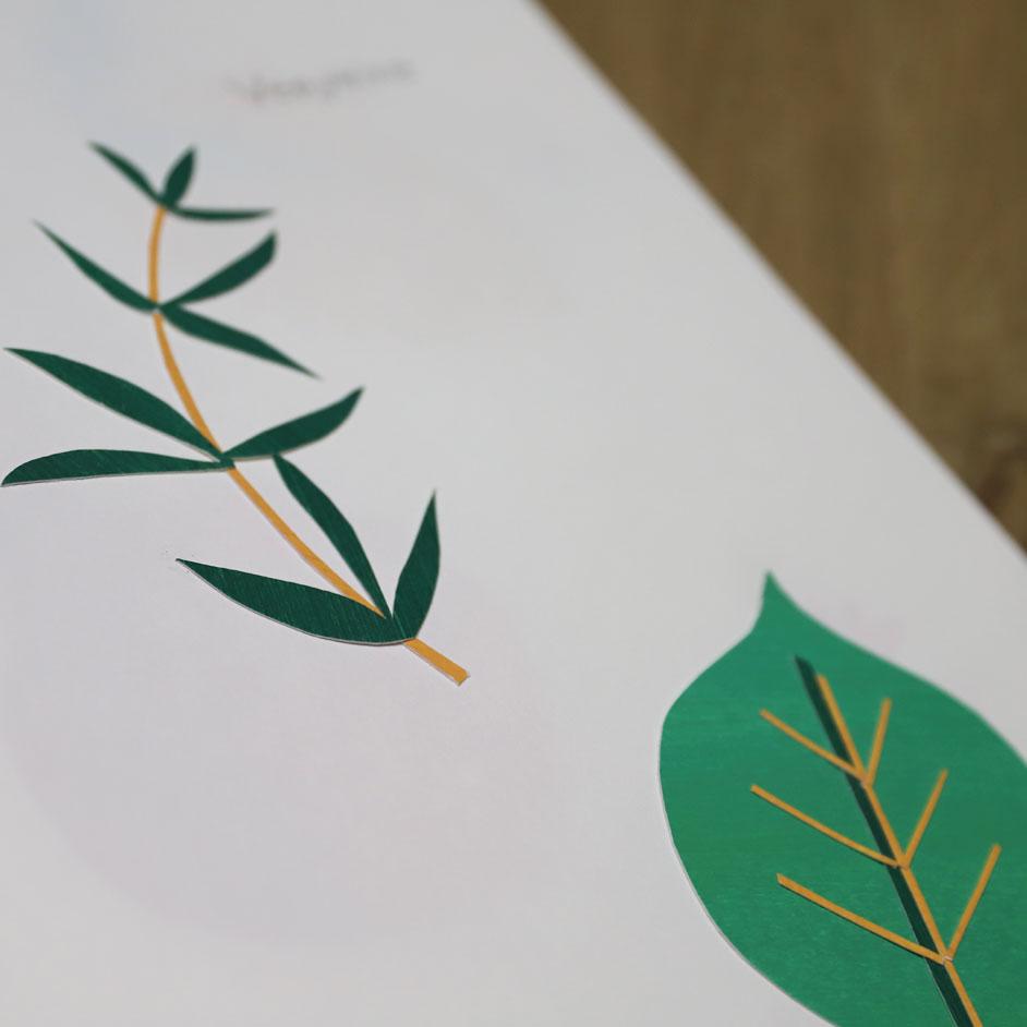 design graphique tisane bio papier découpé